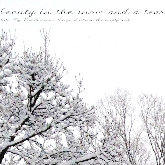 snowy trees greyscale
