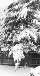 Dad's Pine